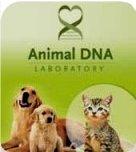 DNA testing http://www.animalsdna.com/www.animalsdna.com/web/page/feline.html