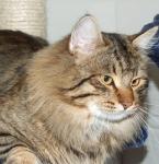 Månedens katt august 2007: S*Ja Znaju Atiila Afanasievich
