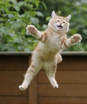 Månedens katt Mars 2012 -  (N) Neofelis Godric