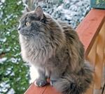 (N) Gaupekattens Bra Karine. Fargekode SIB a (blå)