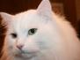 Månedens katt 2007