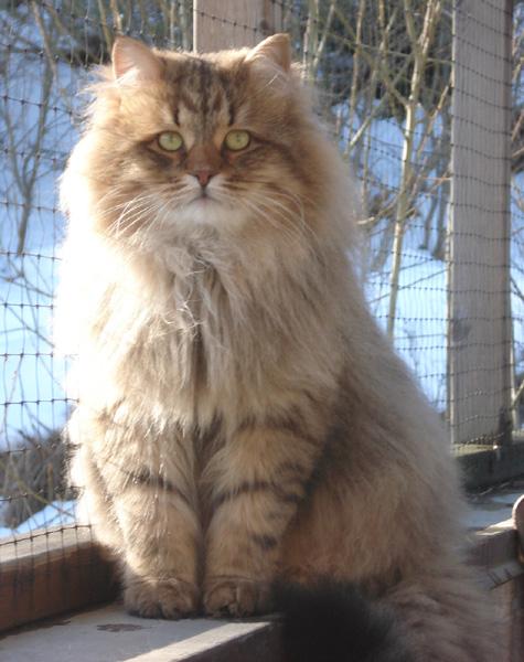 Månedens katt april 2007: S*Knjaze Plamennij Privet