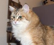 Månedens katt februar 2007: Camilla Onix Gloria*RU