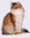 Månedens katt mars 2008: Camilla Onix Gloria
