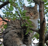 manedens-katt-juli-2010-nfelixibir-flaminia