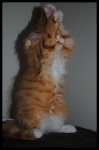manedens-katt-november