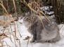 Månedens katt 2011
