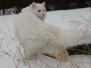 Månedens katt 2012