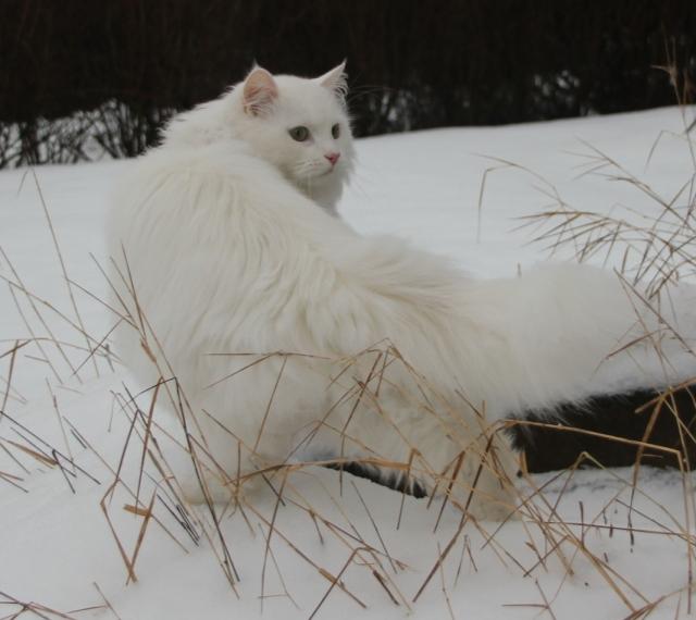 Månedens katt februar 2012