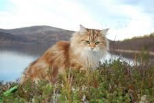 Månedens katt Januar 2012