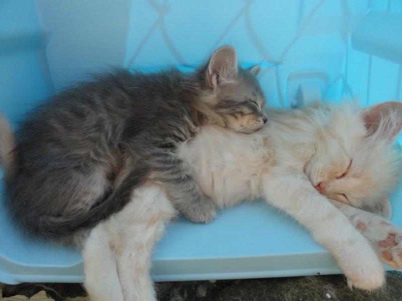 Månedens bilde oktober 2013: (N)Djenghis Cat Qutie Blue og Påskeharen